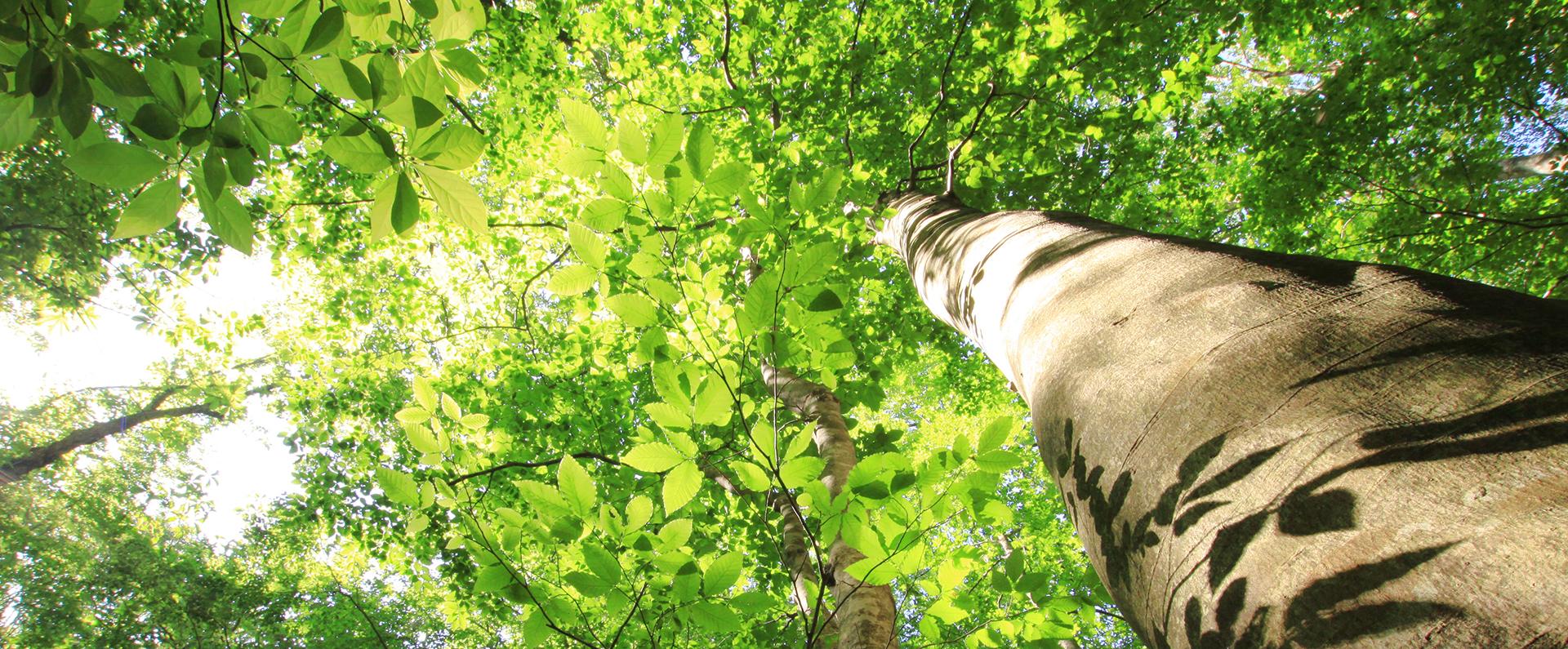 山形県小国町の白いぶなの森